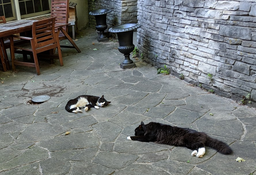 Outdoor cats and air conditioners: just say no
