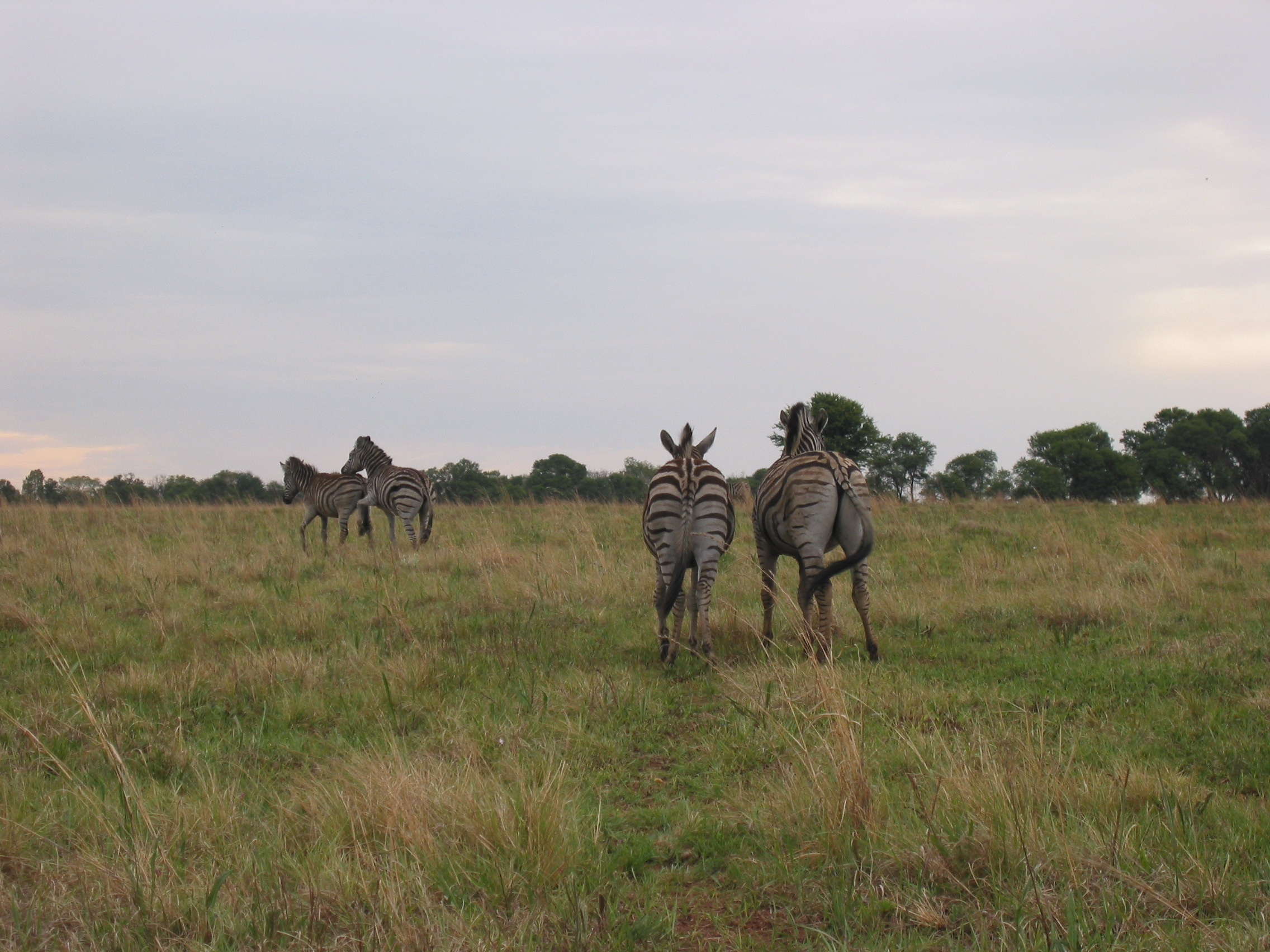 Tales from the road: the longest daytrip with the zebra