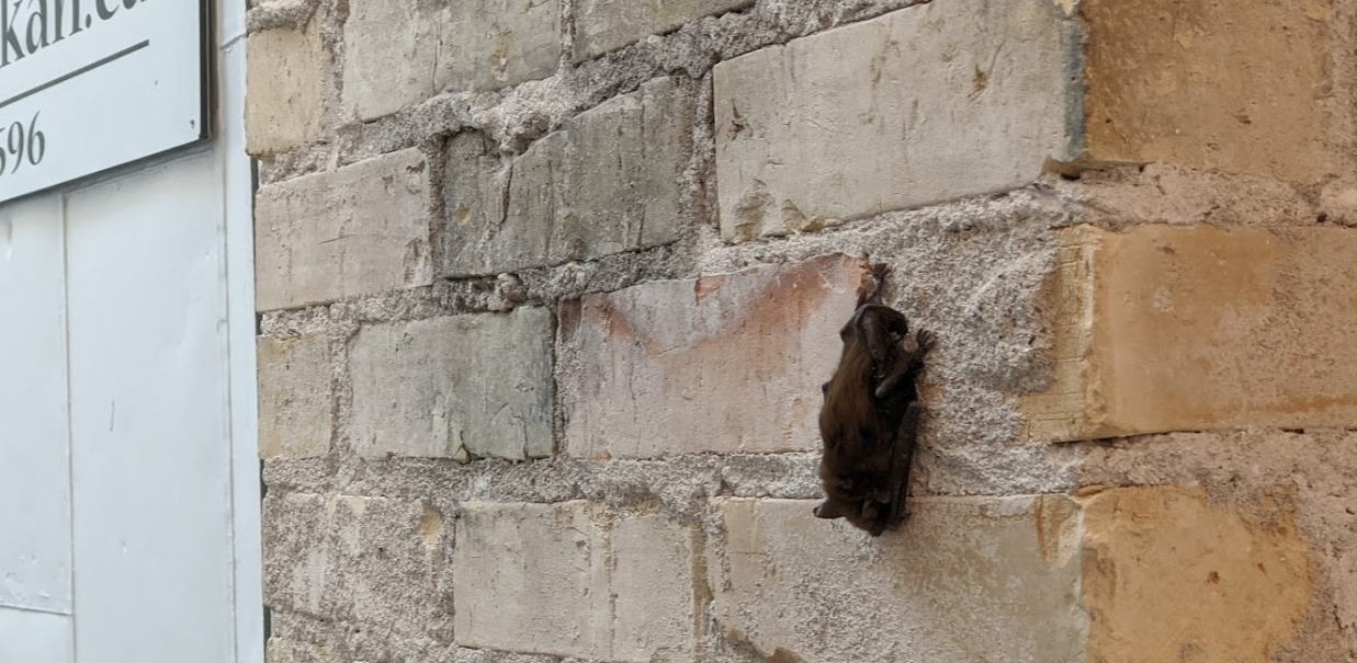 Spring has sprung, the bat has ris